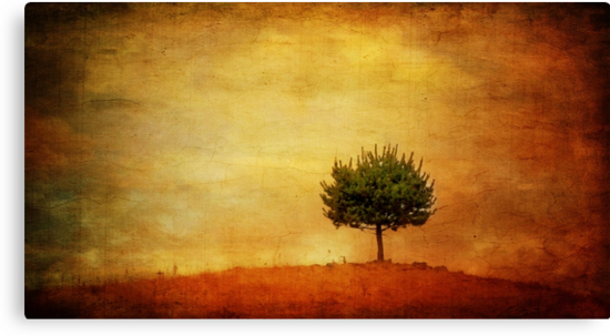 Lone Pine by Clare Colins