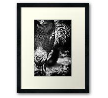 Afrikanische Zwergziege Framed Print