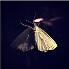 White night butterfly by Carlos Acosta