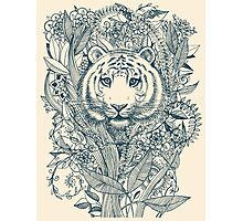 Tiger Tangle Photographic Print