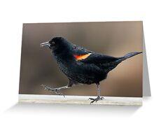 Blackbird Bootcamp Greeting Card