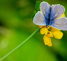 Blue Beauty by ncp-photography