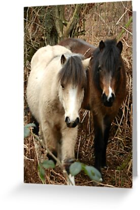 National Trust Ponies by CreativeEm