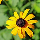 A Bright Spot In Your Day by WeeZie