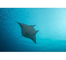 Soaring Manta Ray Photographic Print