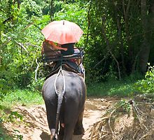 Elephant trekking through jungle by Stanciuc