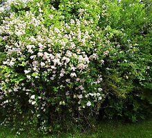 Rose Wall by WildestArt