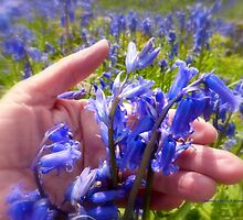 I Love Bluebells by Charmiene Maxwell-batten