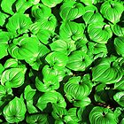 Shiny Green © by Ethna Gillespie