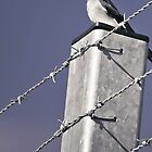 Birds - On the fence by aboxofrain