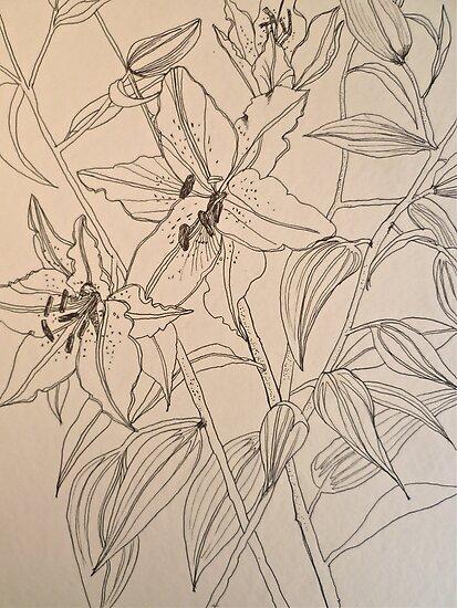 Lilies.  Pen sketch EMoore Golding© by Elizabeth Moore Golding