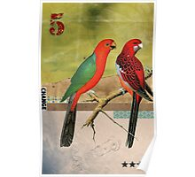 Animal Collection by Elo -- Birds Poster