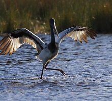 Wing Dance by byronbackyard