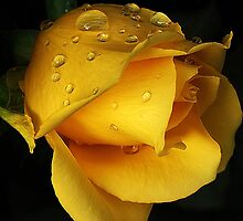 Yellow drops by CarlaSophia