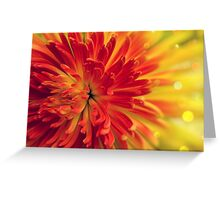 orange-red flower Greeting Card