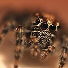 Mr Spider put his happy face on upside down by Graeme M