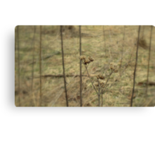 EARTH TONES Canvas Print