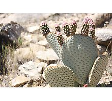 Cactus and Buds Photographic Print