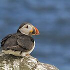 Puffin by M.S. Photography & Art