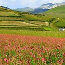 Fields  by annalisa bianchetti