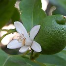Lime with White Flower & Ant by Jesi Marie Timpe