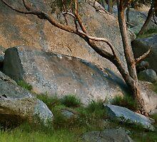 Gum & Granite by Harry Oldmeadow