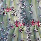 Red & Black & White Spiked Cactus by Jesi Marie Timpe