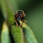 Hover Fly by Kai Ketelsen