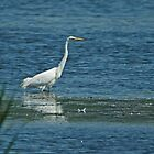 Great White Egret by VoluntaryRanger