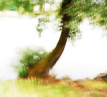 Artscape......Willow Tree on the Rhine by Imi Koetz