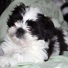 Suzi's  Baby Picture at 7weeks by Margaret Harris