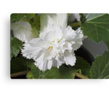 Fringed Begonia Blossom Canvas Print