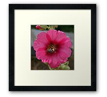 Collection Point Bee Framed Print