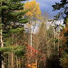 Sunlit Trees After The Rain Shower by SummerJade