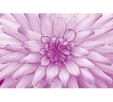 Dahlia Radiant Orchid - JUSTART ©  Photographic Print