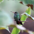 Sitting Pretty  by hummingbirds