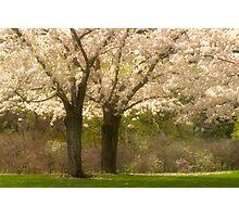 Blossom Dell_1 Photographic Print