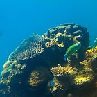 This is why they call it the GREAT Barrier Reef by MrBennettKent