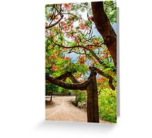 Royal Poinciana or flame tree blossom in Thailand Greeting Card