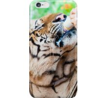 Buddhist monk feeding with milk a bengal tiger  iPhone Case/Skin