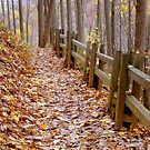 Leaf Lined Path.....  ^ by ctheworld
