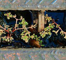 Flora  by Robert Meyer