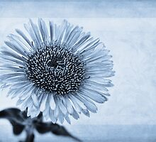 Cyanotype Aster with Textures by John Edwards