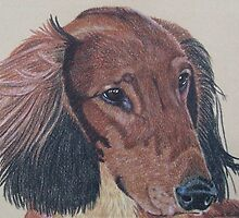 Long-haired Dachshund by Anita Meistrell Putman