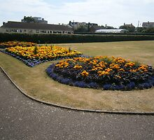 SEATON IN BLOOM by brucemlong