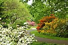 Azalea Gardens - Philadelphia - Pennsylvania - USA by MotherNature