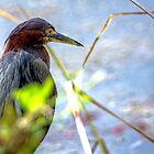 Heron by imagetj