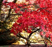 Japanese Maples in Autumn Sticker