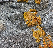 Lichen Covered Fence Post 1 by marybedy