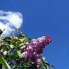 Lovely Lilac 3 by WalnutHill